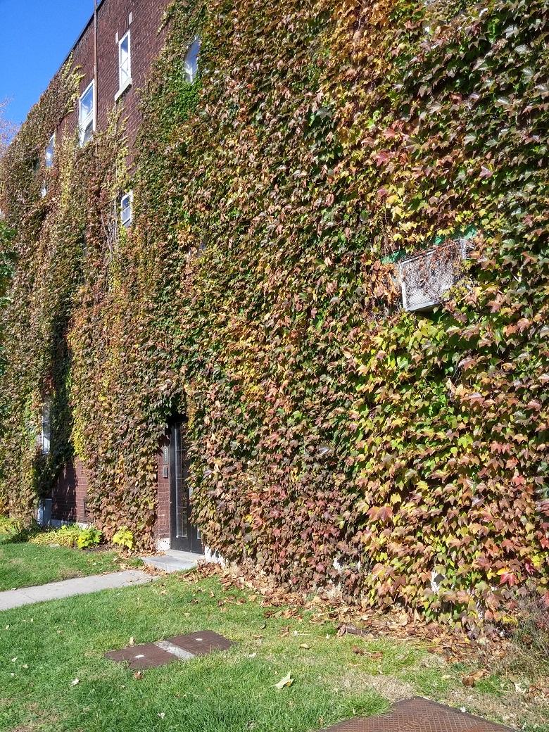 1 bedroom Apartments for rent in Notre-Dame-de-Grace at 2325-3405 Oxford - Photo 05 - RentQuebecApartments – L19485