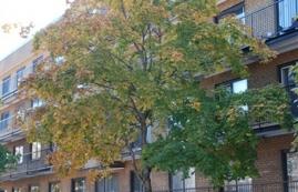 Studio / Bachelor Apartments for rent in Villeray - Saint-Michel - Parc-Extension at 7600 Lajeunesse - Photo 01 - RentQuebecApartments – L1846