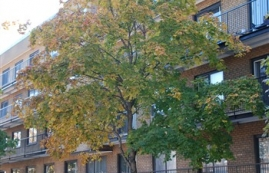 1 bedroom Apartments for rent in Villeray - Saint-Michel - Parc-Extension at 7600 Lajeunesse - Photo 01 - RentQuebecApartments – L668